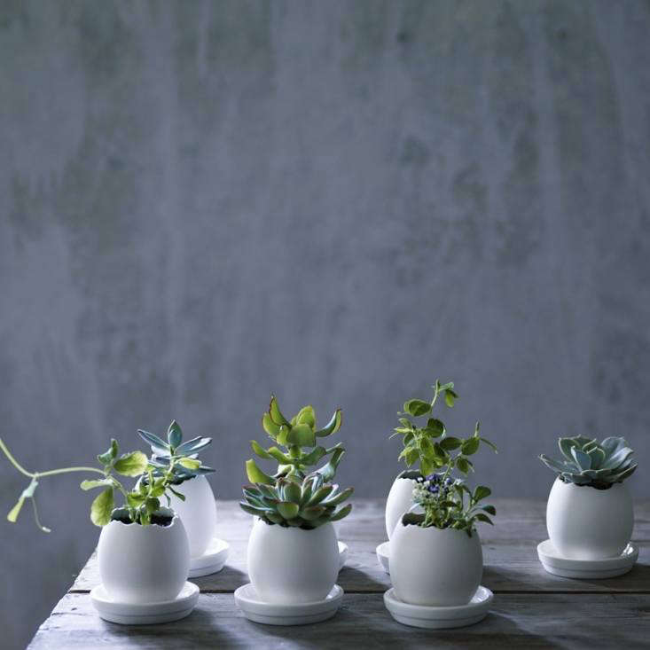 michelle&#8\2\17;s latest obsession: simple white plant pots for succulents 11