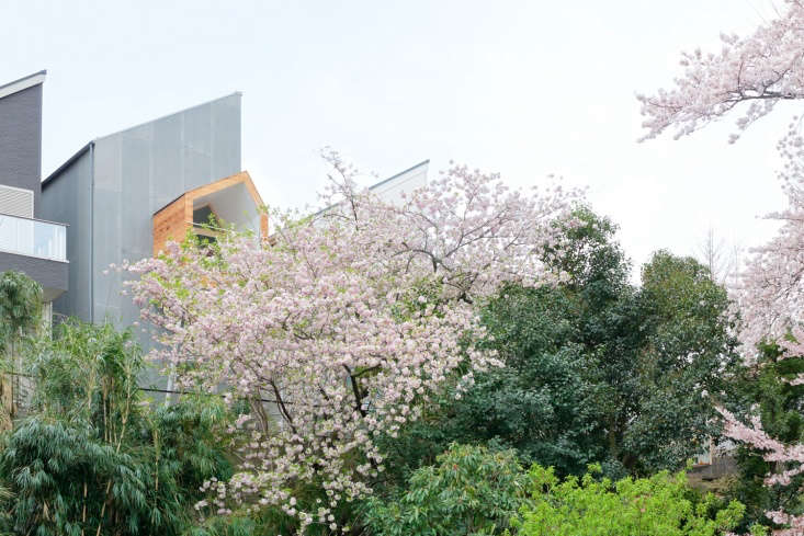 the back of the house abuts a verdant park. the structure with the wooden balco 9
