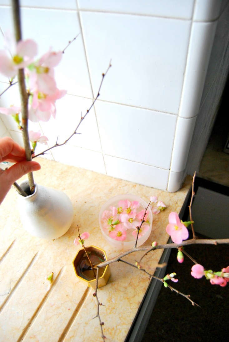 an easy way to modernize the first blossoms of spring? place quince in a cerami 11