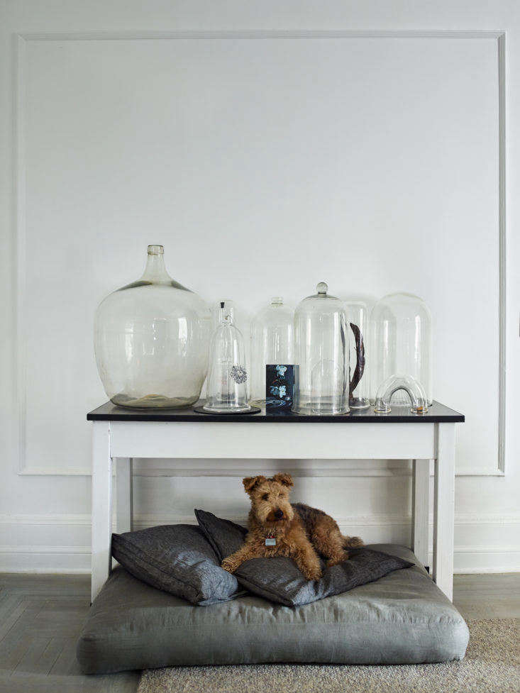 rusty relaxes on his cushioned perch. above him is a collection of cloches (and 11