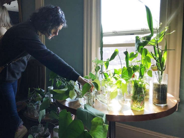 plus, host a plant swap, save a succulent, and ninemore ways to help housepla 13