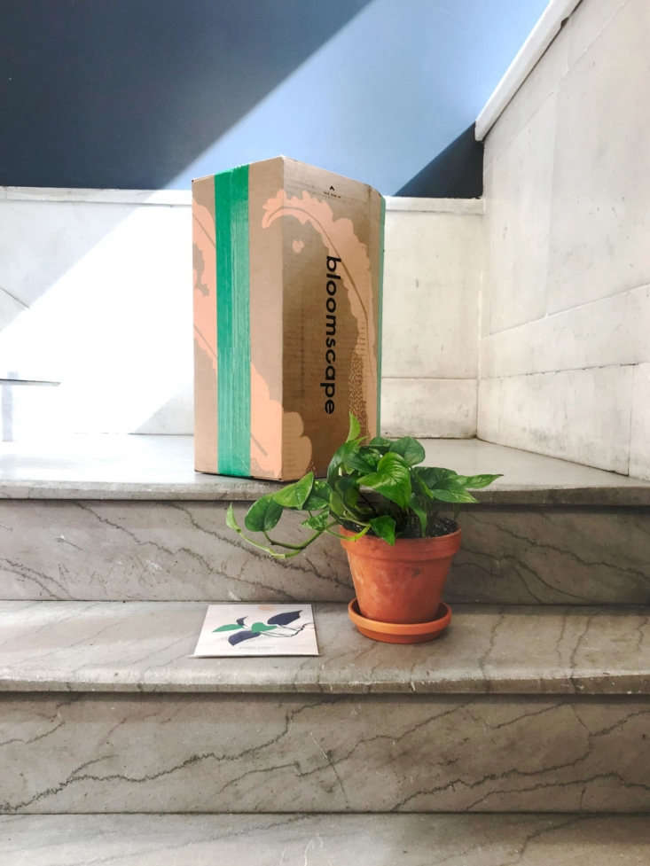 Trending on Gardenista In the Chefs Garden The new plant disruptor? We like this company that delivers houseplants to your door, in all different sizes (read: suitable for tiny apartments). Read more atThe Instant Jungle Courtesy of Bloomscape.