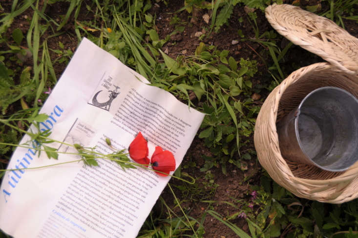 foraging for poppies has the potential for a lot of charm: it involves bringing 11