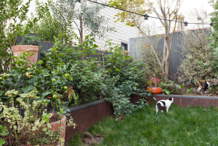 In their verdant backyard, which also served as a playground for the family&#8