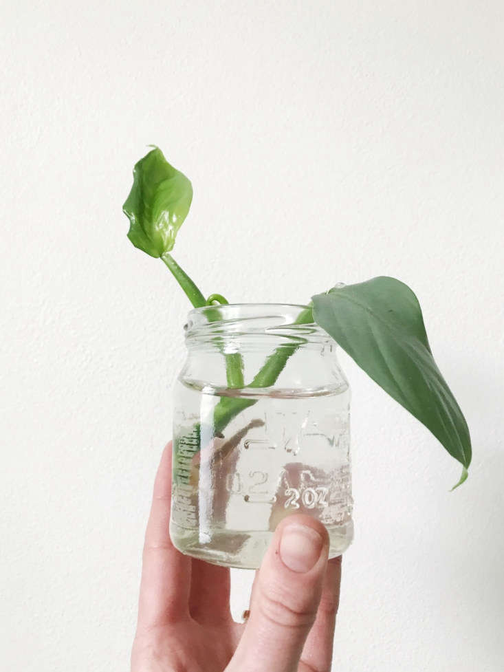 this just in: plant swaps are sweeping the nation. read more about the trending 11