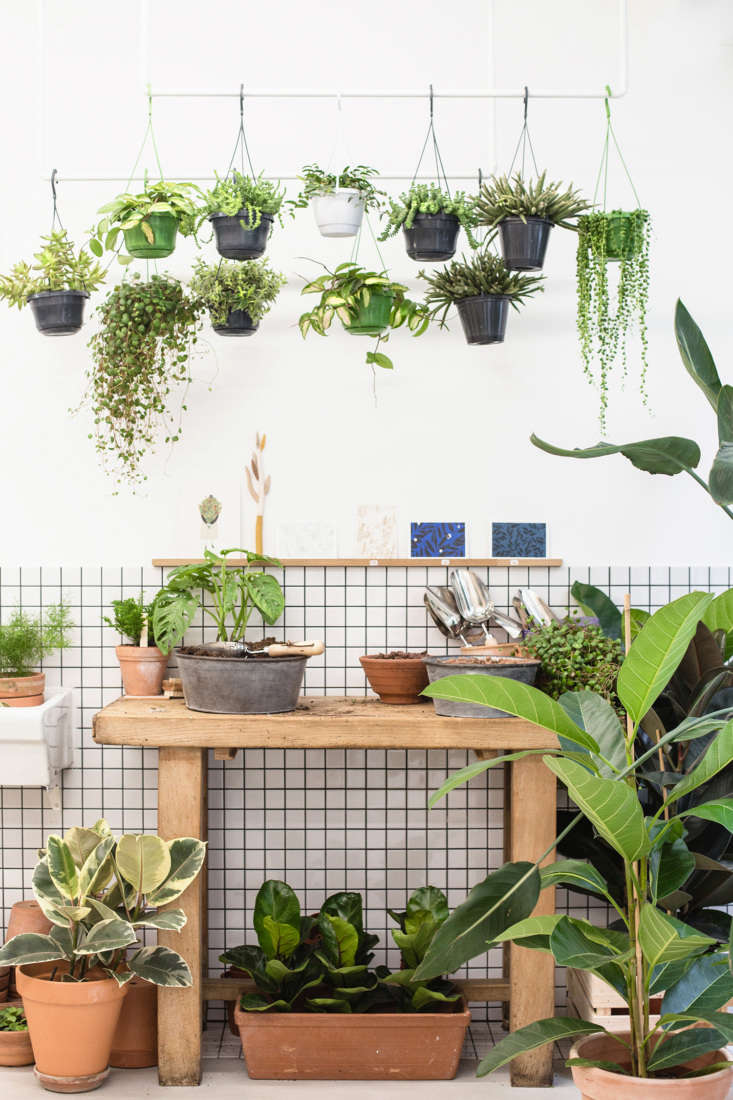 Trending on Gardenista Back to Basics Post remodel by architect duo Heju Studio, houseplant shop Leaf, in Paris, feels like shopping in a Parisian greenhouse. Step inside inShopper's Diary: Leaf Shop Végétal in Paris. Photograph by Fanny Cortade, courtesy of Heju Studio.
