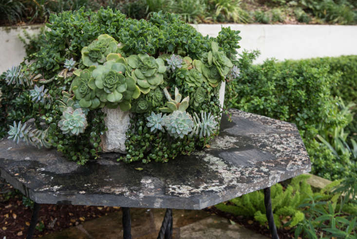 succulents still have a few tricks up their sleeves, but the gardenista editors 10