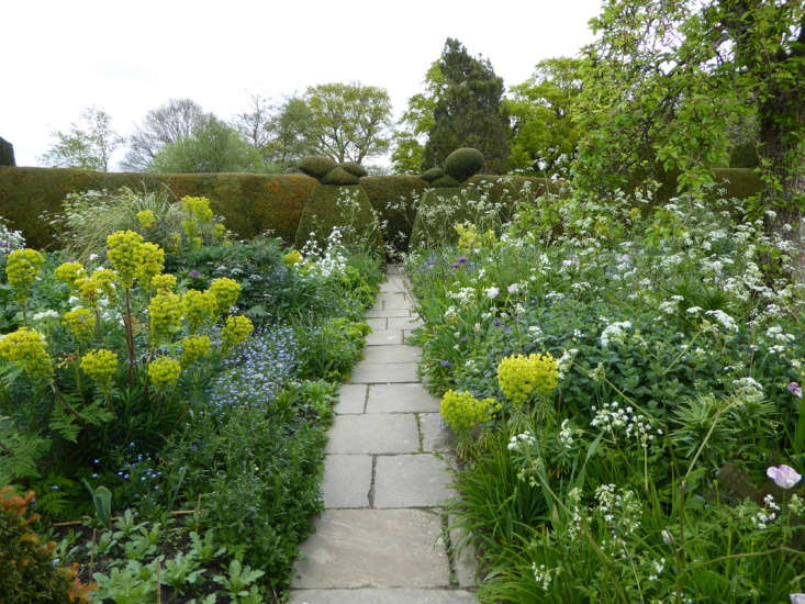 cow parsley is a weed—or at least it used to be. revered gardener fergus garr 11