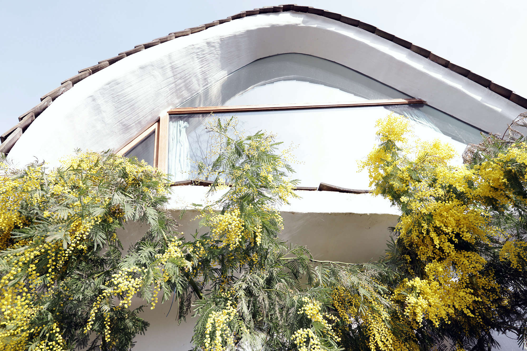A large mimosa tree in bloom meets the second floor of the house.