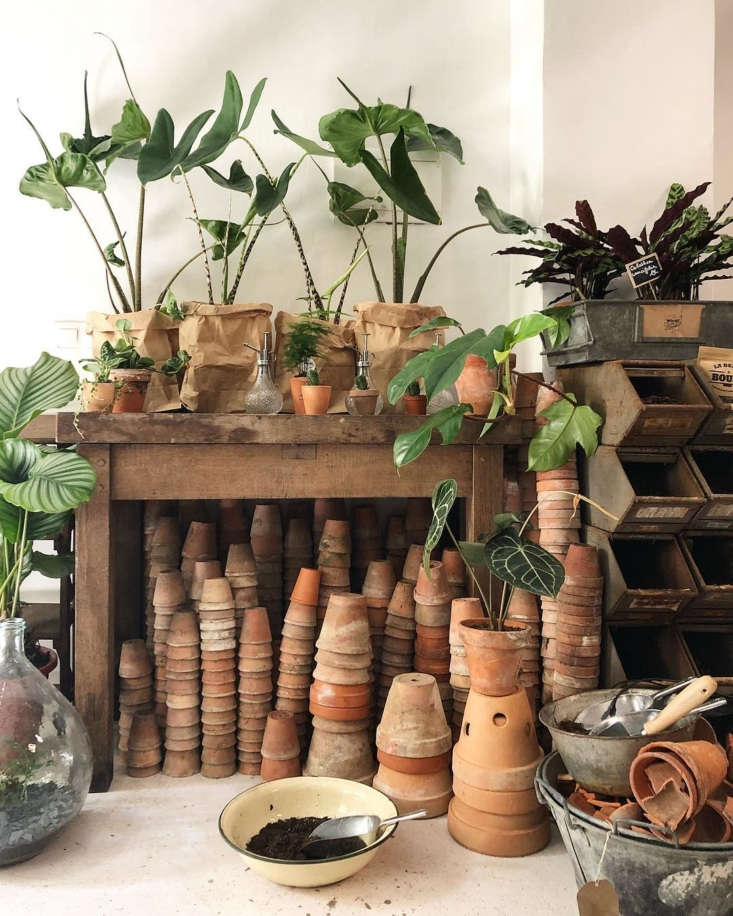 we step inside a verdant hair salon/flower shop owned by a houseplant enthusias 10