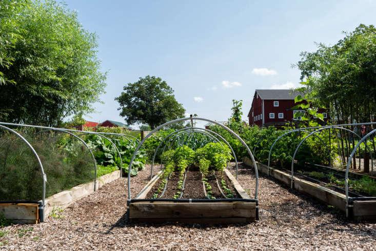 """last season, this was a bare plot,"" says farmer stephen lamberti of the  9"