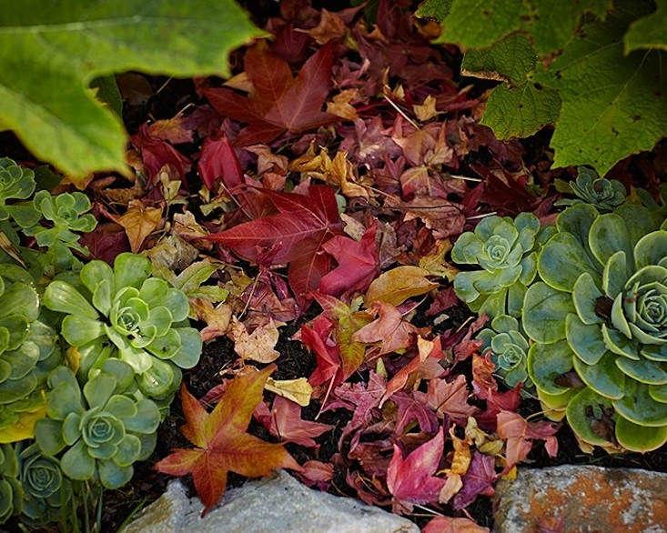 your first garden fallen leaves john merkl