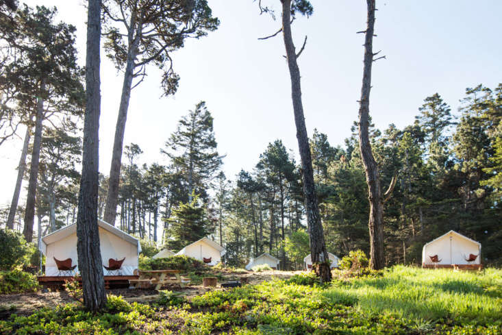 white tents pepper the forest at mendocino grove. the site has the best of both 9
