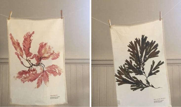 molesworth and bird dish cloths