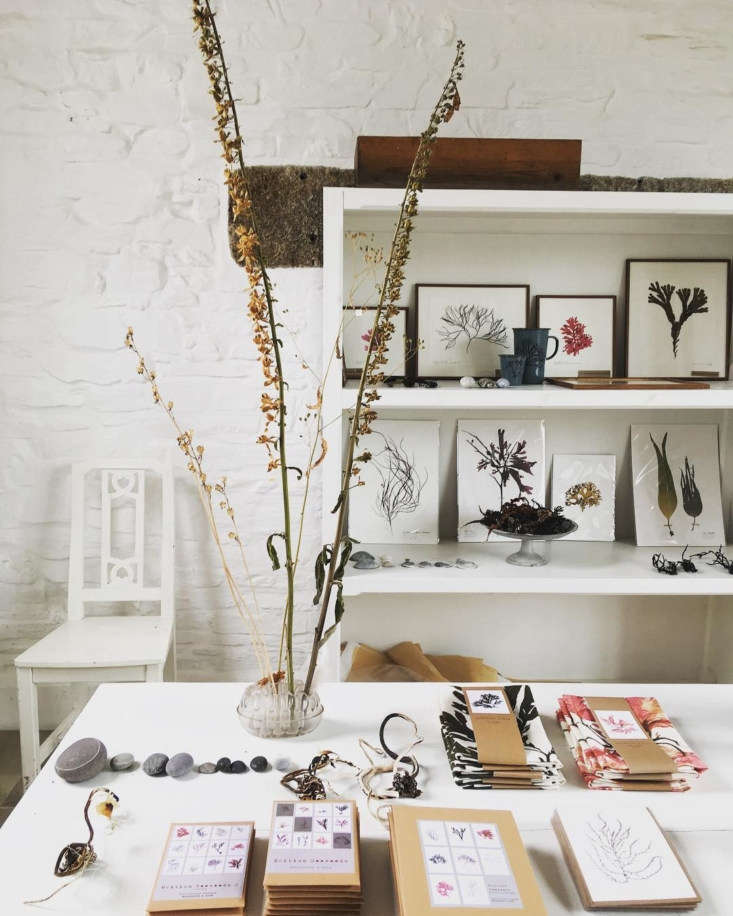 molesworth bird studio cornwall