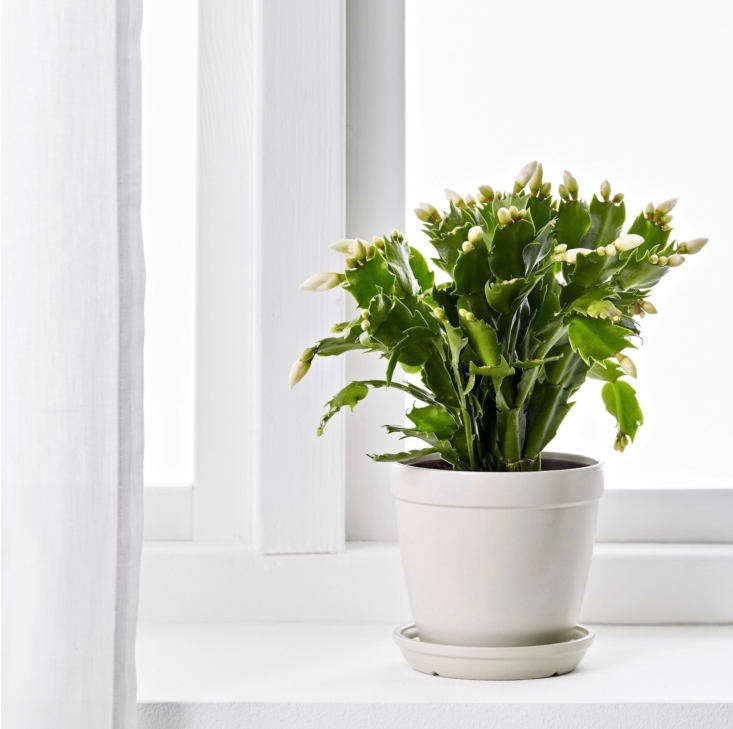 and, the newest addition to ikea&#8\2\17;s houseplant collection couldn& 11