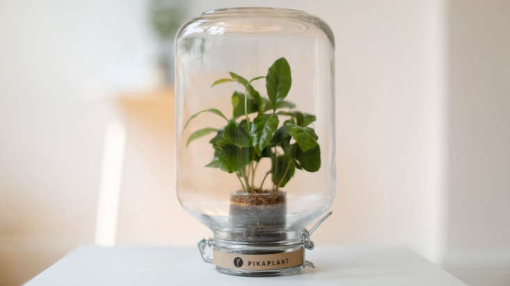 perfect gifts for plant lovers include this self watering (yes, you heard that  9