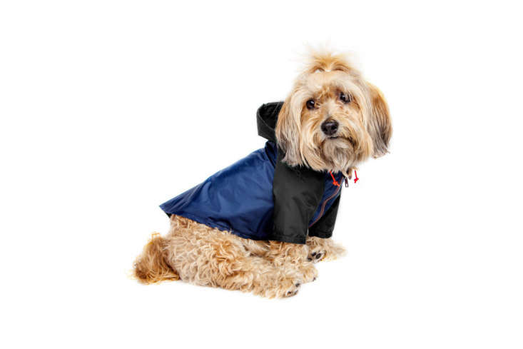 The Wagwear Colorblock Rainbreaker protects dogs from rain and wind. It comes in multiple sizes; starting at $48 at Dog & Co.