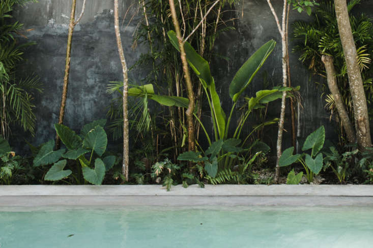 A saltwater pool, blackened plaster wall, and lush foliage make for a pretty palette.