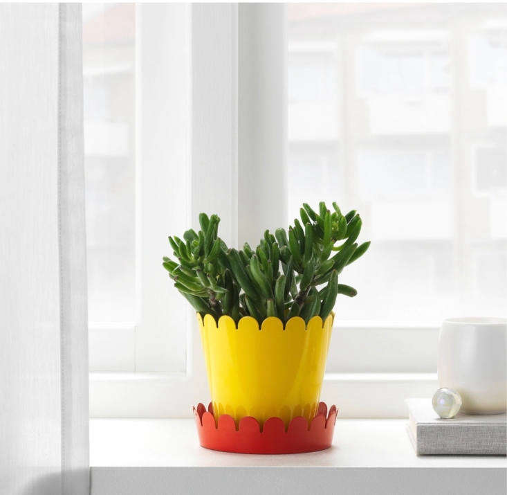 Over on Gardenista: The accessory your houseplants need this summer inA New Ikea Plant Saucer That Will Change Your Life (for 99 Cents).