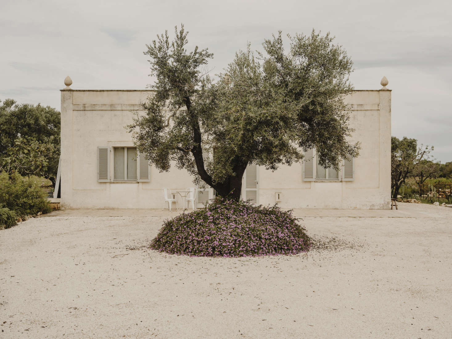 The villa blends into the landscape, guarded by olive trees.
