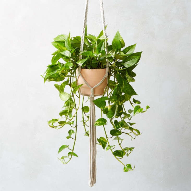 macrame plant holder cb2 1