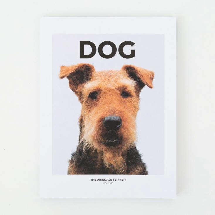 london based indie biannualdog magazine takes a stylish approach to exploring 10
