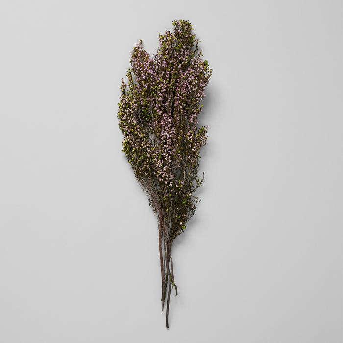 bloomist pink heather dried botanicals