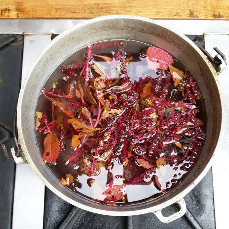 Color Explosion Linens Imbued with Natural Plant Dyes Dyekween Leaves Berries Pot, A DB Botanical Color