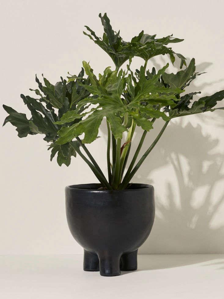 small barro pot from goodee 13