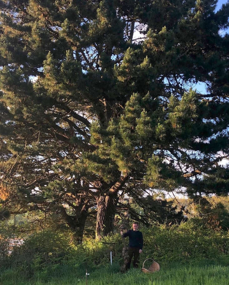 it all started with a beloved \100 year old pine tree in their garden with some 9