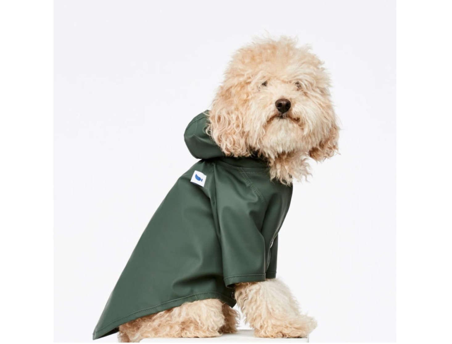 This doggie Raincoat from Spanish brand The Painter&#8