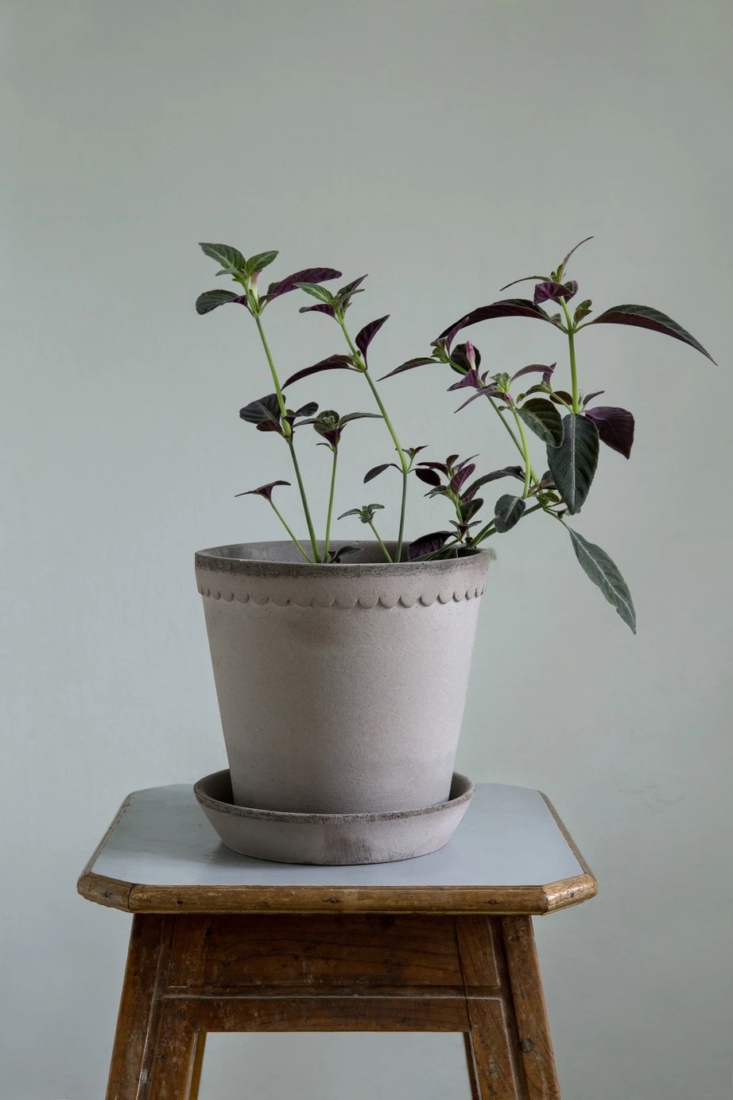 Bergs Potter of Copenhagen has been making planters in Tuscany for nearly 80 years. Its Helena Pot and Saucer, $5