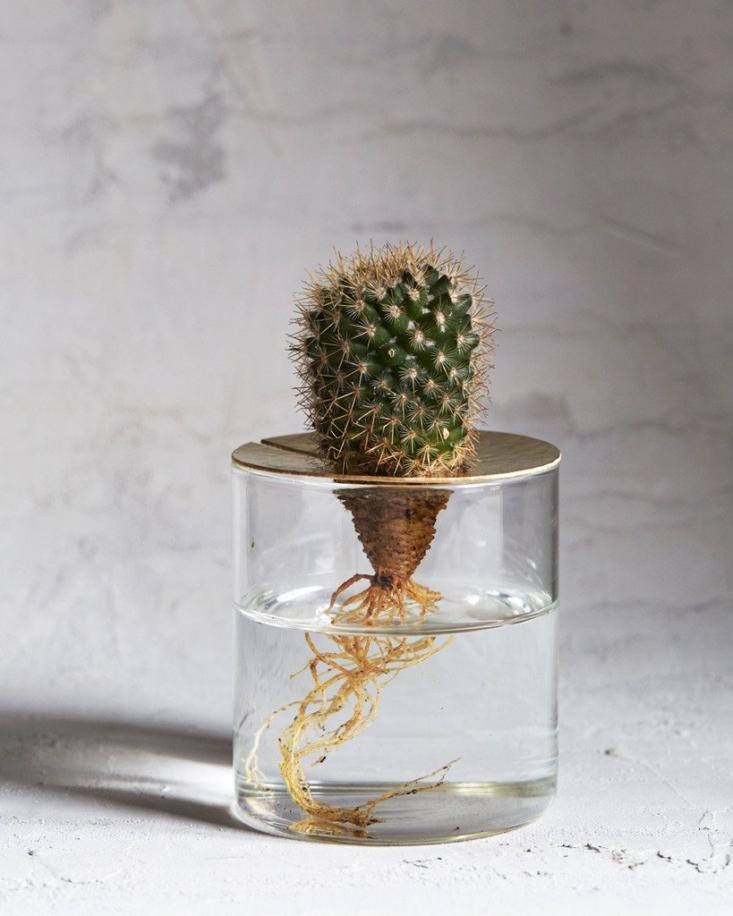 terra vision glass vase brass top