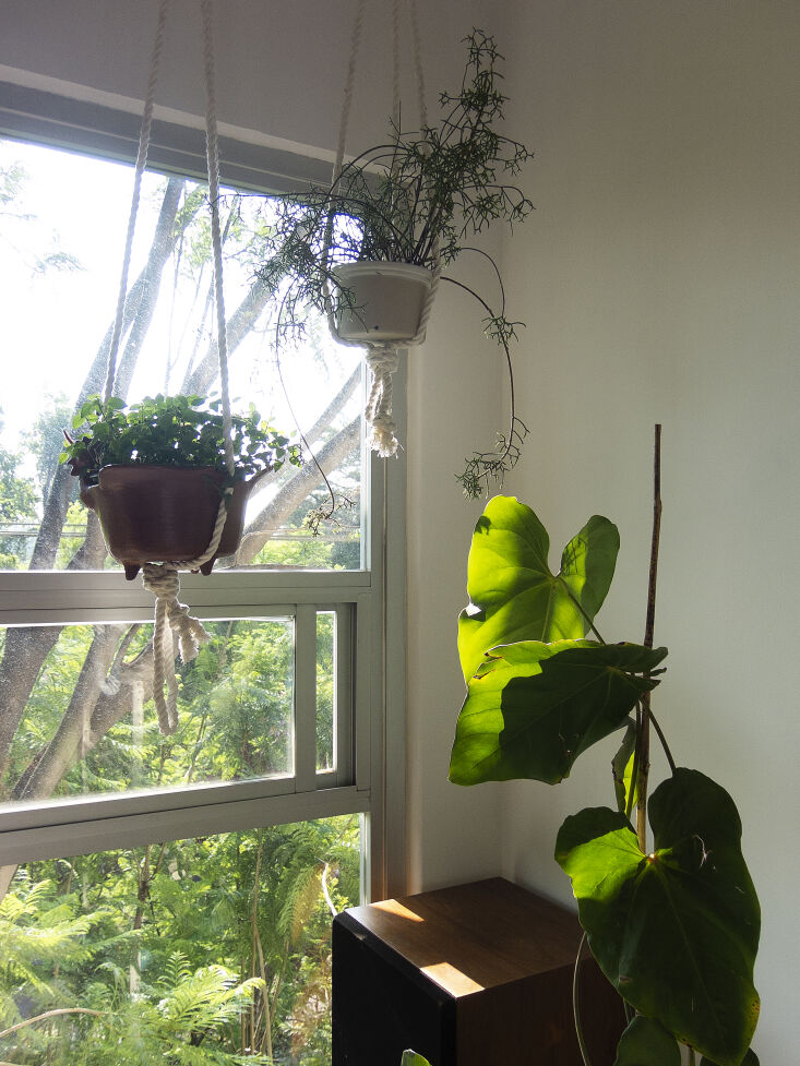 Kitchen of the Week A Mexico City Makeover in Apple Green Settling on a color for the kitchen cabinets took months of deliberation, and was inspired by the leaves on the jacaranda trees outside their living room window. Enrique made the knotted rope hanging planters.