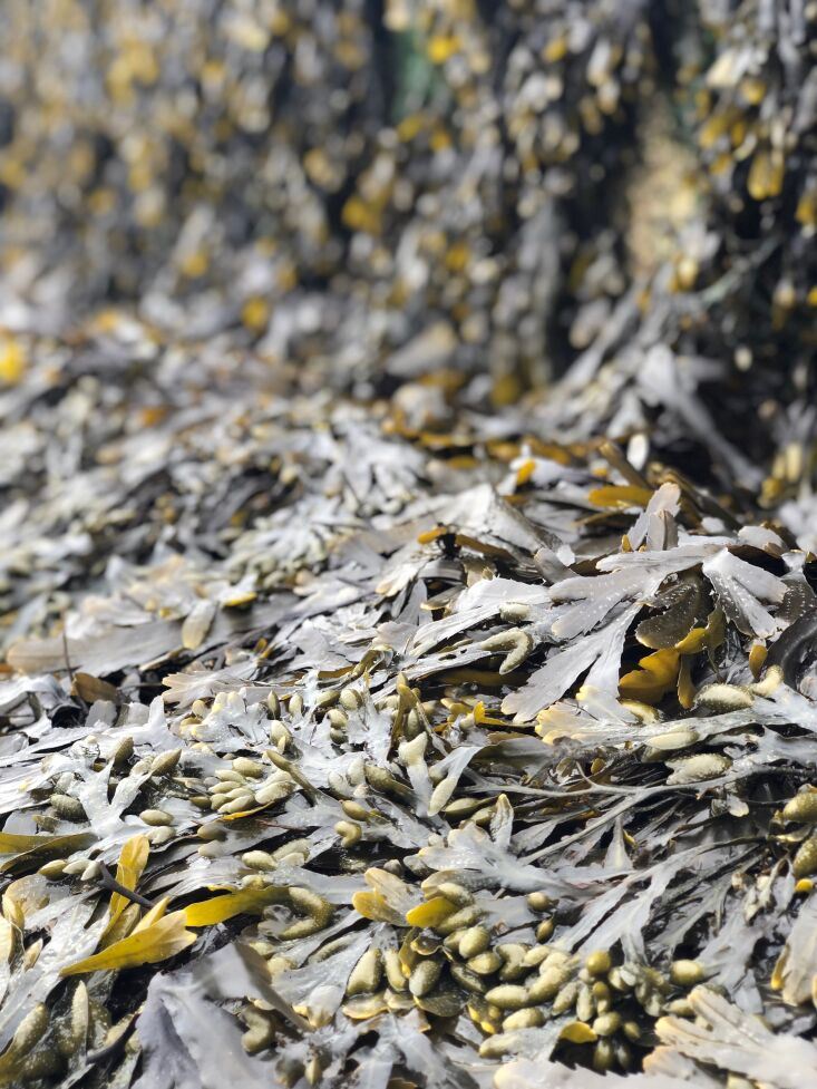 kindred house seaweed